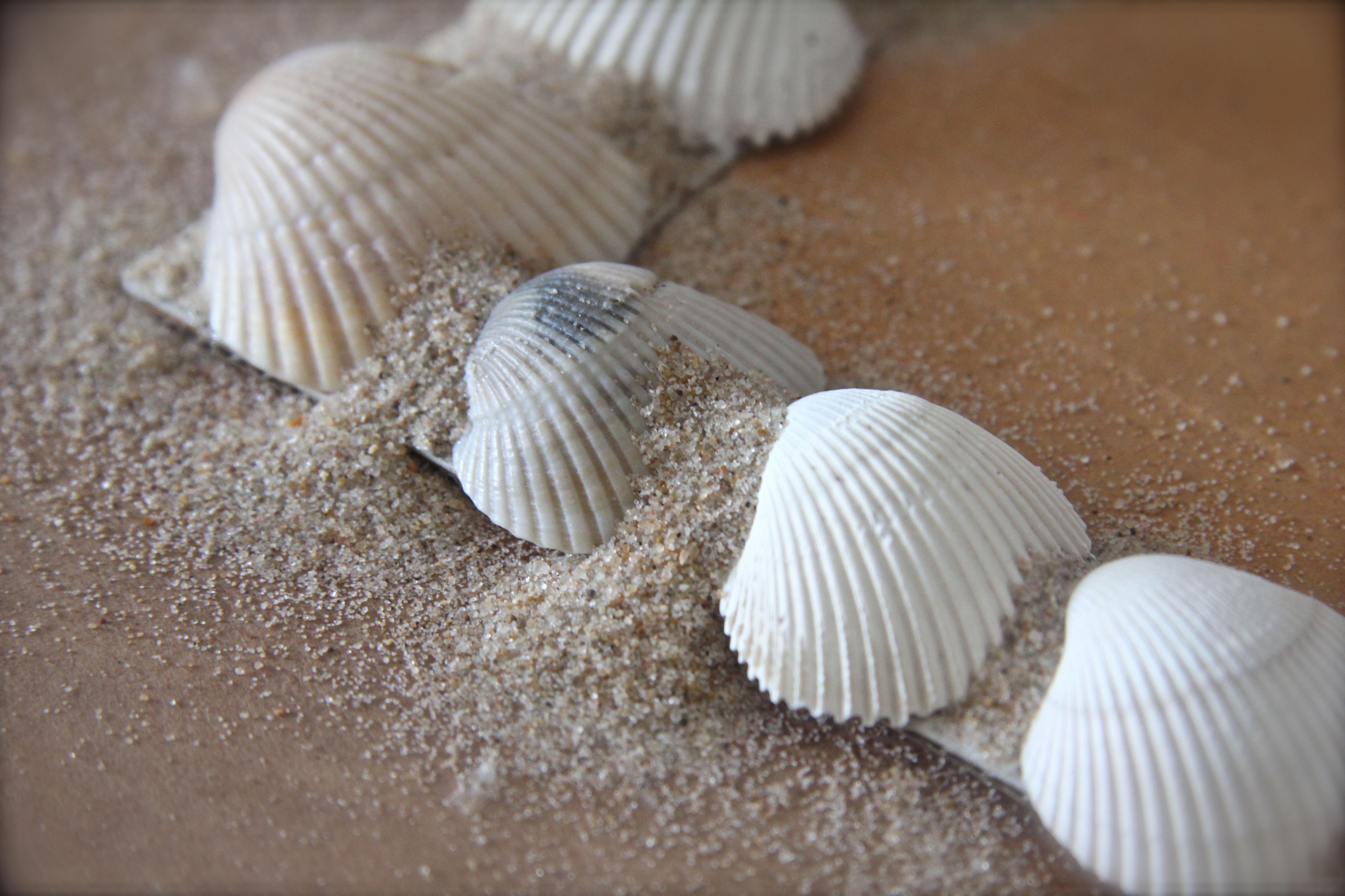 Diy Seashell Frame Simply Deanna